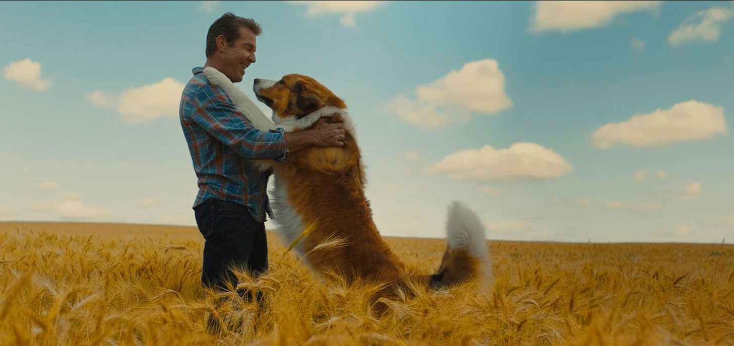 Now Showing: A Dog